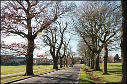Avenue of Trees 2008