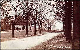 Avenue of Trees 1907