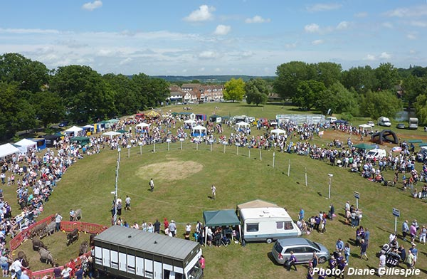 Donkey Derby 2015 Overview