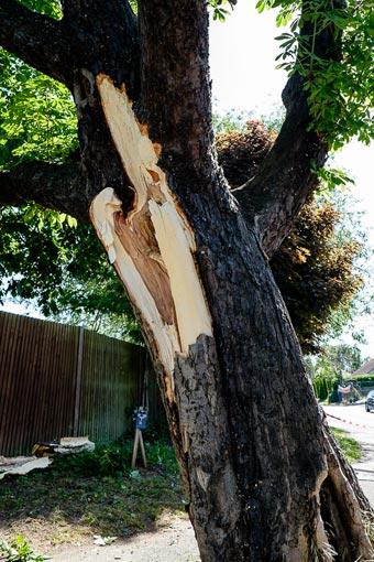 Horse Chestnut Tree damage